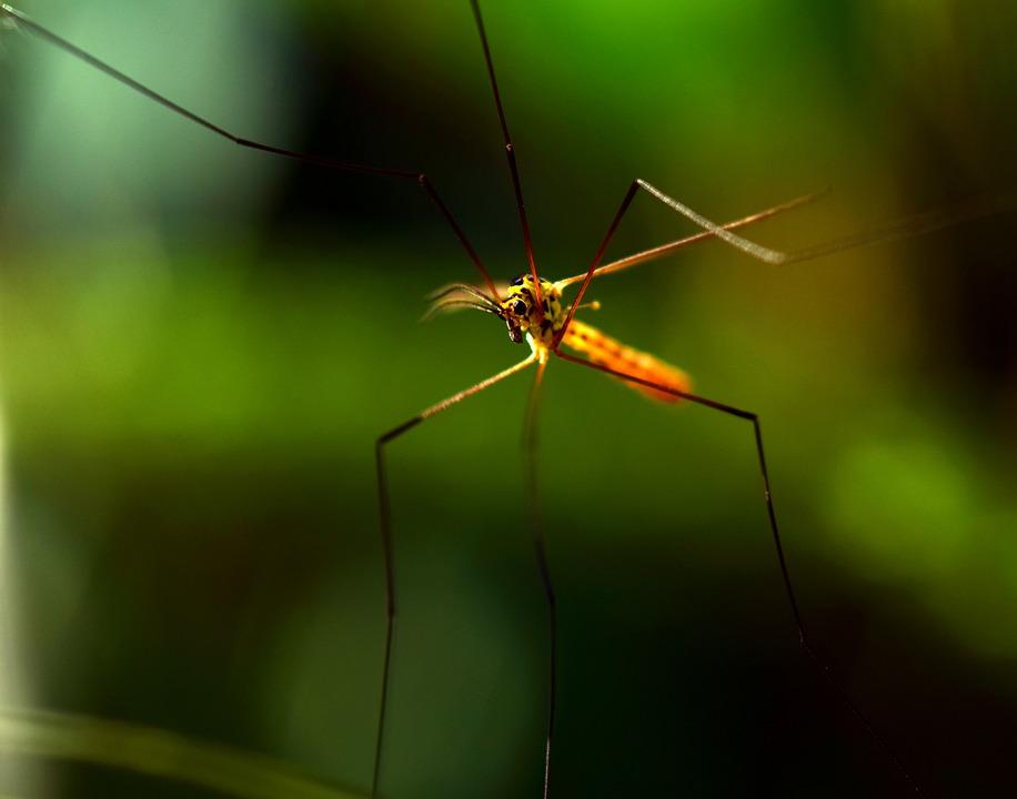 Allontanare le zanzare con 7 rimedi naturali